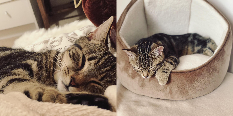 Two cats: Maz & Leia