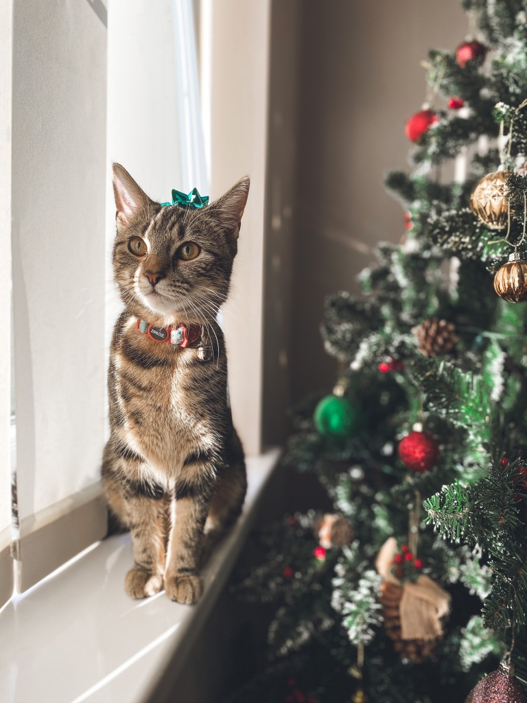 Kitten Leia with Christmas bow on her head sat next to Christmas Tree